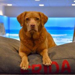Bürohund Frida